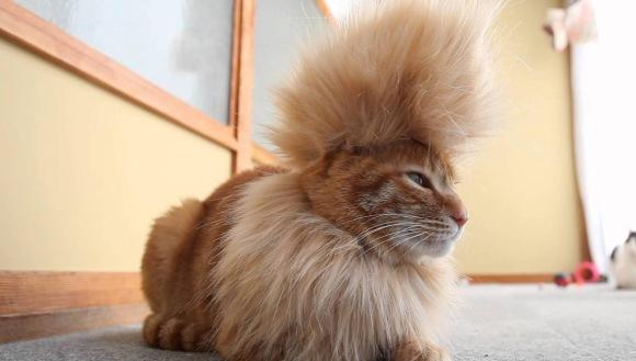 20 de animale care ne dau clasă la capitolul hair-styling – (Galerie Foto)