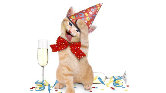 Happy birthday! - 20 cele mai simpatice petreceri aniversare ale animalelor - Galerie Foto