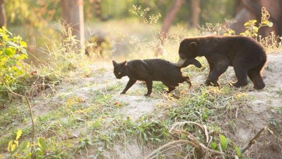 Uimitoarea prietenie dintre o pisică și un pui de urs ce nu trebuia să se nască - Galerie Foto