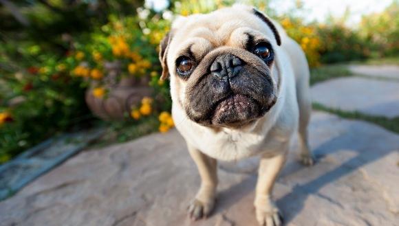 13 reacții super amuzante ale câinilor, care se potrivesc situațiilor de zi cu zi - FOTO