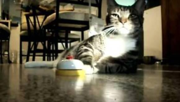 O pisică apasă pe sonerie, pentru a primi mâncare ori de câte ori dorește – VIDEO