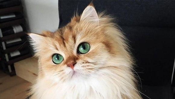 Faceți cunoștință cu Smoothie, cea mai fotogenică pisică din lume - Galerie Foto