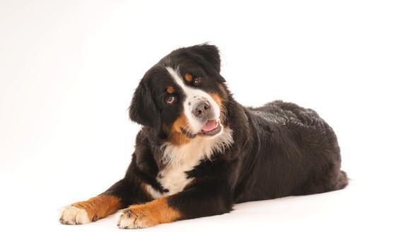 10 câini ale căror expresii faciale te vor face să râzi în hohote – FOTO