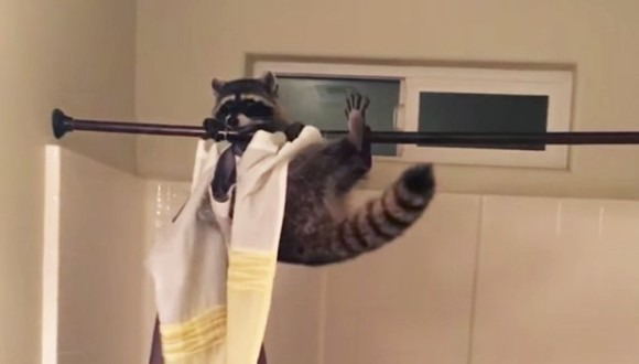 A intrat în baie și a dat peste un raton făcând acrobații – VIDEO