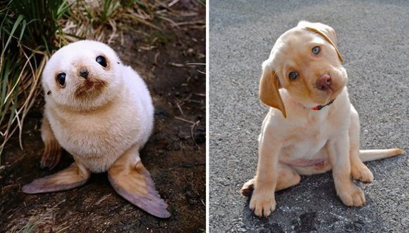 15 fotografii super drăgălașe, care ne dovedesc că focile seamănă perfect cu niște cățeluși simpatici - Galerie Foto