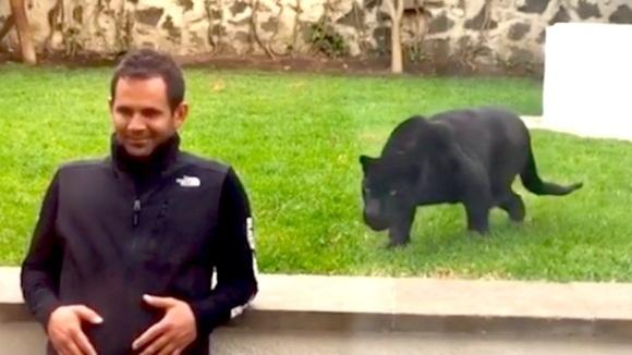 Momentul înfricoșător în care o panteră neagră uriașă se năpustește asupra unui bărbat. Rezultatul este neașteptat  - VIDEO