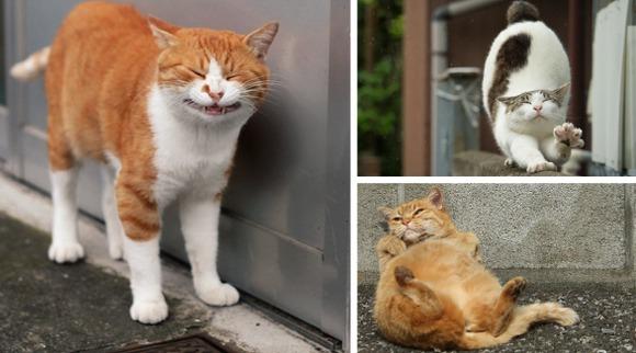 Cele mai amuzante grimase ale pisicilor tokiote, într-o serie memorabilă de fotografii - Galerie Foto