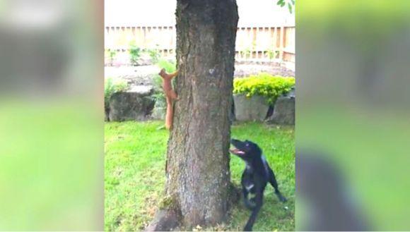 Prinde-mă dacă poți! O veveriță reușește să enerveze un câine la maximum - VIDEO