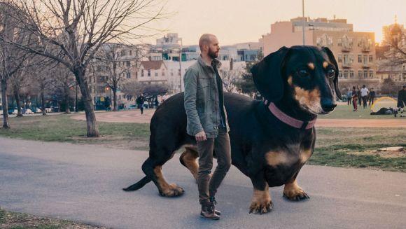 Vivian, câinele uriaș care cucerește America - Galerie Foto