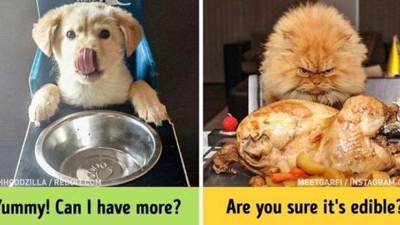 Pisici versus câini: 10 fotografii care ne demonstrează că pisicile și câinii sunt de pe planete diferite – Foto