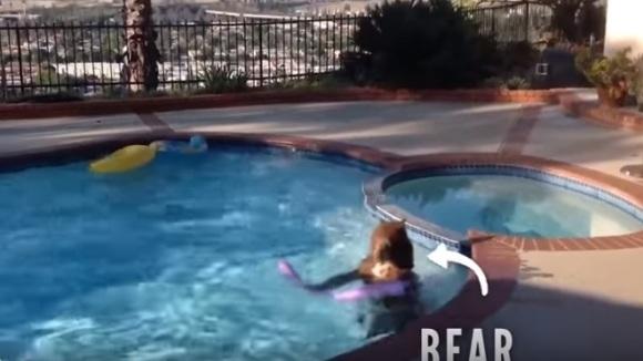 Când găsești un urs jucându-se în piscina din curtea casei tale... VIDEO