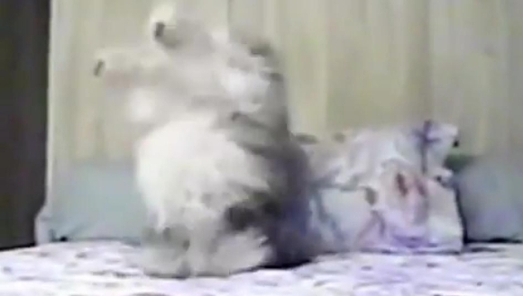 Râzi cu lacrimi când vezi ce face acest câine în pat – VIDEO