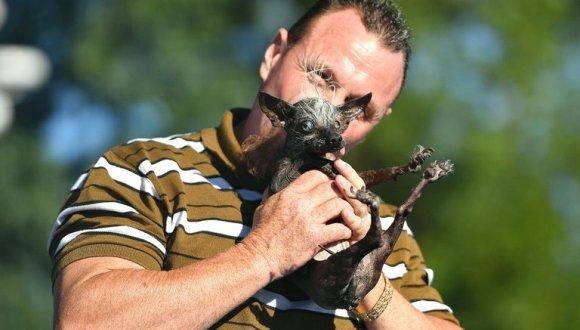 """Cum arată câștigătorul titlului de """"cel mai urât câine din lume"""". Stăpânul """"este oribil, mulțumesc!"""" - VIDEO"""