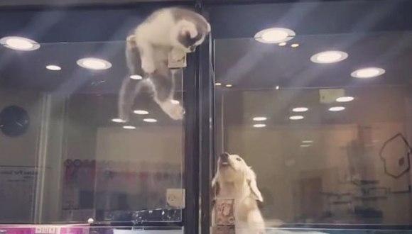 A evadat din cușca ei, pentru a-și petrece timpul alături de prietenul singuratic – VIDEO adorabil