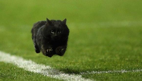 O pisică neagră a întrerupt un meci de rugby, iar internauții au răspuns pățaniei în cel mai amuzant mod - Galerie Foto