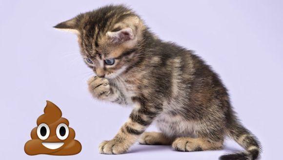 Emoji kittens: a fotografiat pisicuțe și le-a alăturat în mod ilar unor emoji extrem de populare - Galerie foto