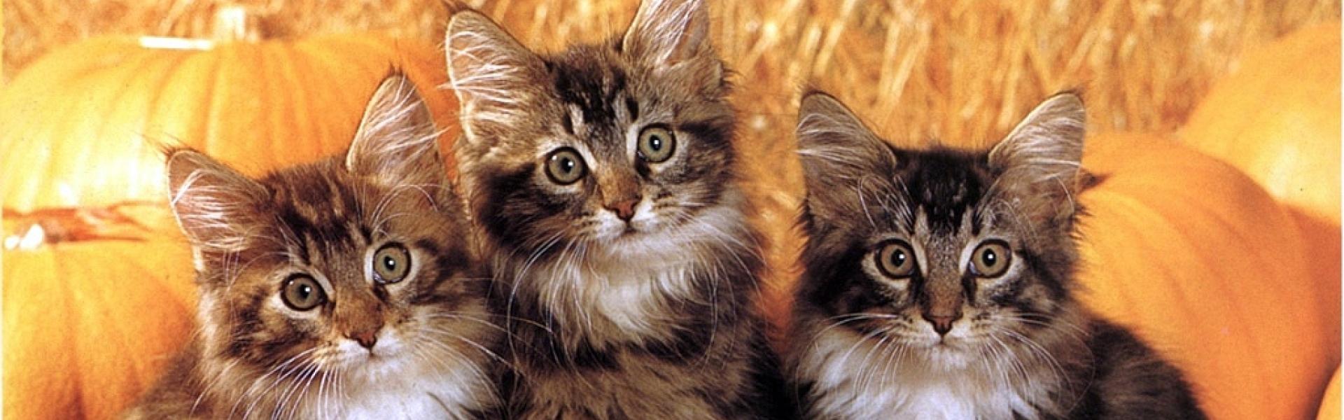 """""""Serios? Nu pot să cred!"""" - 10 animale extrem de interesate de ceea ce spui – Foto"""