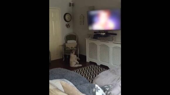 """Câinele este vrăjit: dansează ca nimeni altul pe melodia """"Wake me up before you go"""" – VIDEO"""