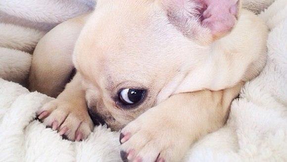 Faceți cunoștință cu Milo, câinele narcoleptic ce te va face să exclami de încântare - Galerie Foto