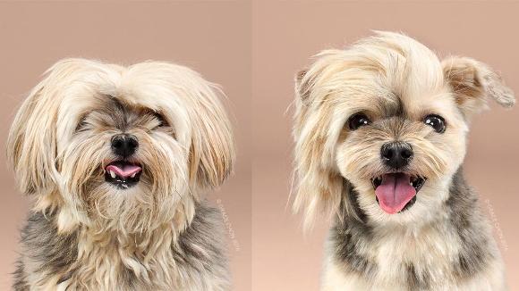 Fotografii cu patrupezi canini, înainte și după ce și-au făcut frizura - Galerie Foto
