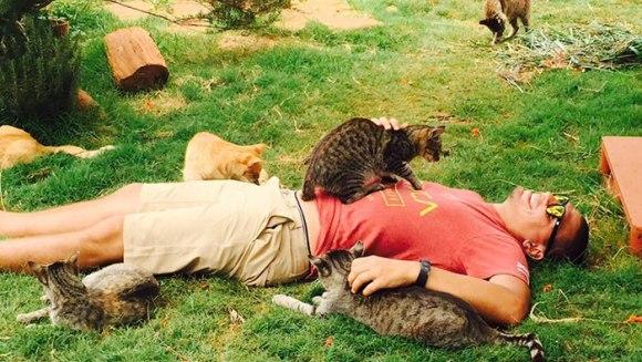 Sanctuarul pisicilor – locul în care poți mângâia 500 de feline. Unde se află el –Galerie Foto și Video