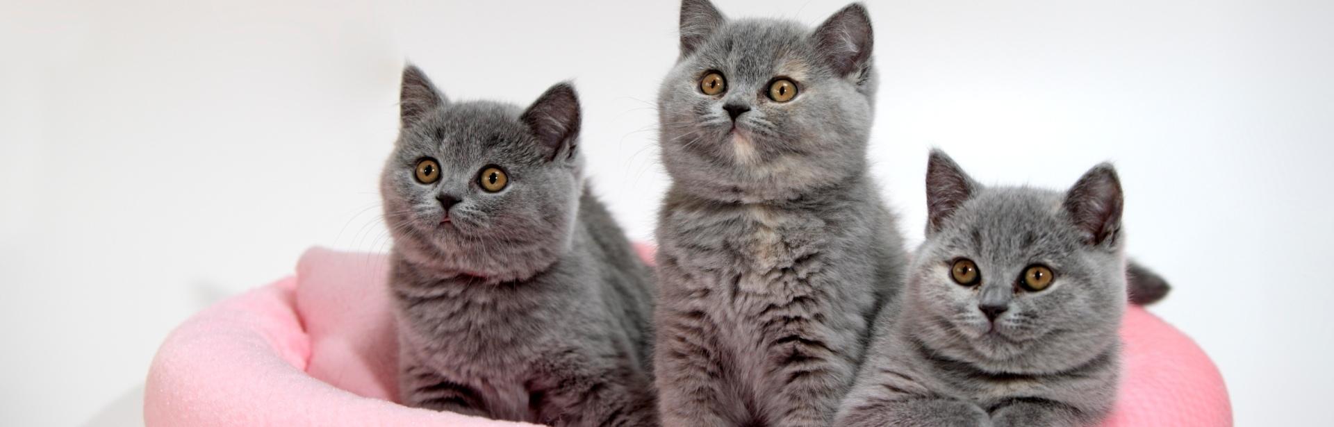 Top 20: cele mai adorabile pisicuțe din lume - Galerie Foto
