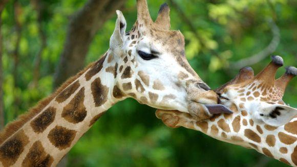 Clipe de tandrețe în fotografii ce demonstrează că animalele pot fi mai afectuoase decât oamenii - Galerie Foto