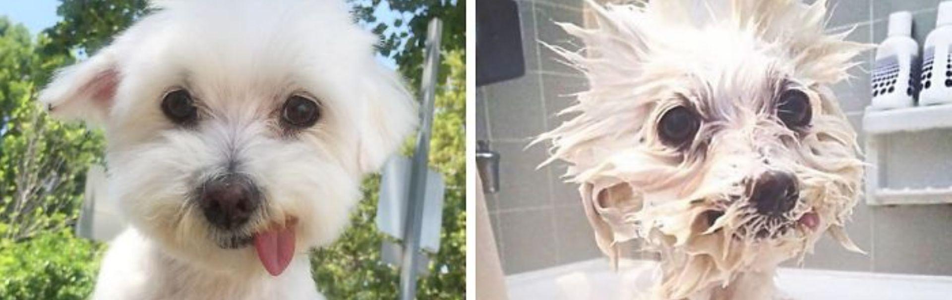 Before and after: 10 fotografii ilare cu patrupezi canini înainte și după baie (Galerie foto)