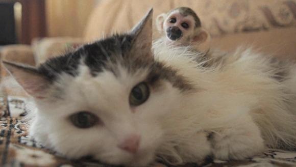 O pisică a adoptat un pui de maimuță, după ce mămica lui l-a părăsit. VIDEO adorabil