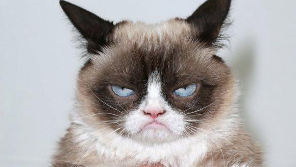 Cum arată fotografia cu Grumpy Cat care valorează 700.000 de euro