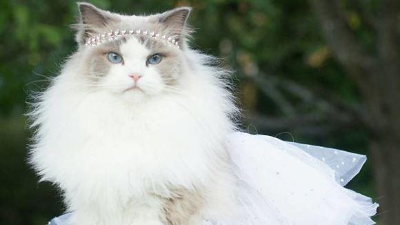 Faceţi cunoştinţă cu Aurora, prinţesa pufoasă care a cucerit internetul - Galerie Foto