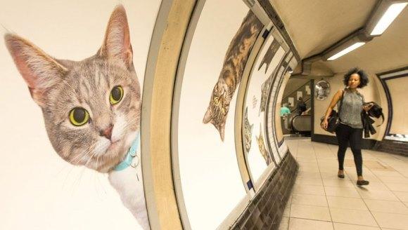 Într-o staţie de metrou din Londra, reclamele au fost înlocuite cu poze cu… pisici - Galerie foto