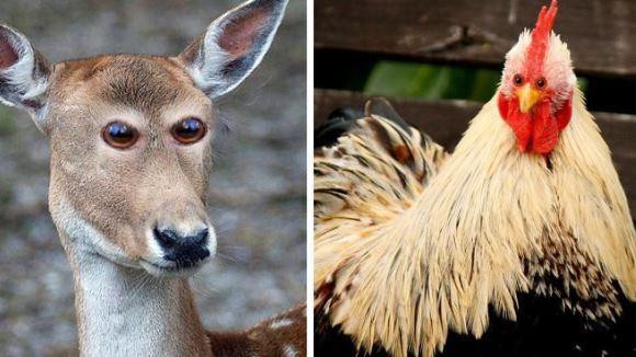 Cum ar arăta animalele, dacă ar avea ochii în faţă, precum oamenii - Galerie foto