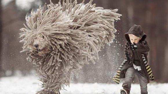 """Băiatul şi uriaşul """"Mop"""": fabuloasele imagini ale prieteniei dintre un copil şi câinele lui uriaş - Galerie Foto"""