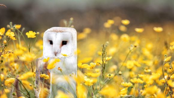 Cum ar arăta animalele, dacă animalele ar avea formă de cub - Galerie Foto