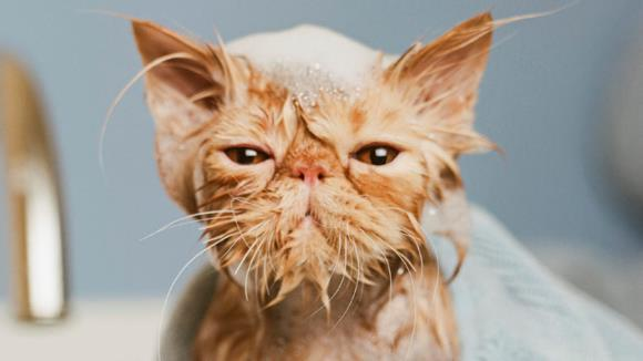 Pisici ude, care nu îşi vor ierta niciodată stăpânii pentru că le-au îmbăiat - Galerie foto