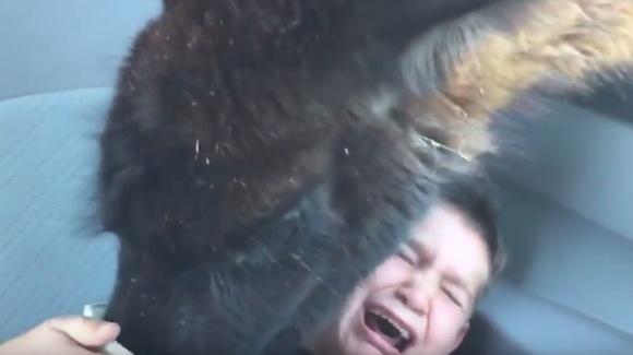 """Tatăl râde şi filmează, în timp ce băiatul lui este """"atacat"""" chiar în maşină de o lamă puţin cam nărăvaşă – VIDEO"""