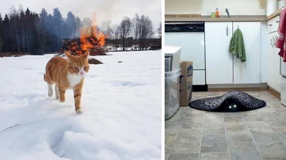 7 imagini care ne dovedesc: pisicile sunt demoni în devenire – FOTO
