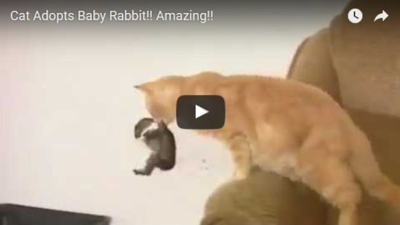 A luat puiul de iepure în gură şi… Greu de imaginat ce a urmat – VIDEO