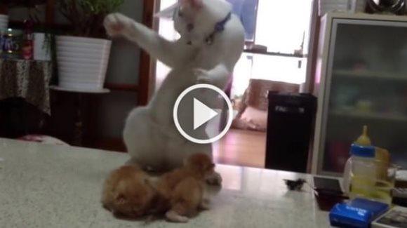 O pisică învaţă doi puişori să lupte pentru viaţă, în cel mai adorabil mod – VIDEO