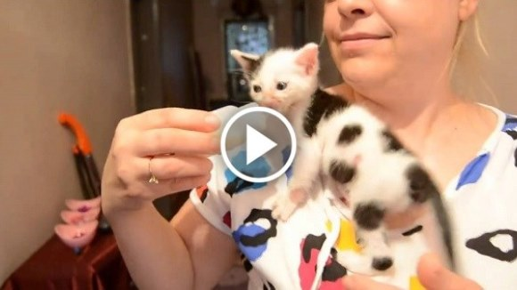 Ce face o pisi-văcuţă când îşi vrea biberonul cu lapte chiar acum, iar mămica refuză să i-l dea?