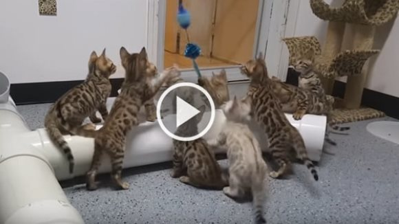 Un singur obiect poate hipnotiza 10 pisicuţe, minute în şir. Imaginile sunt savuroase – VIDEO