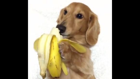 Clipul săptămânii: un căţeluş molfăie o banană – VIDEO