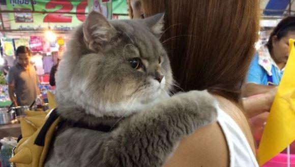 Bone Bone, pisica enormă din Tailanda. Toată lumea îşi doreşte să se fotografieze cu ea - Galerie foto