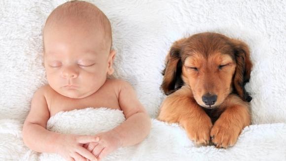 Înduioşător! Imagini care dovedesc că un câine este mai bun decât o pernă – Galerie foto