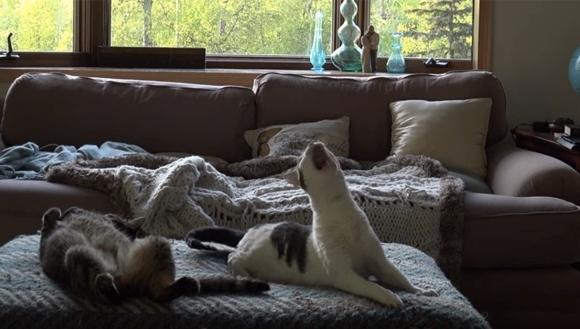 Tot auzea zgomote ciudate venind din dormitorul lui. A montat o cameră de filmat şi… – VIDEO