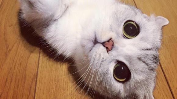 Hana, pisicuţa japoneză care are ochii cât cepele. A cucerit internetul - Galerie foto