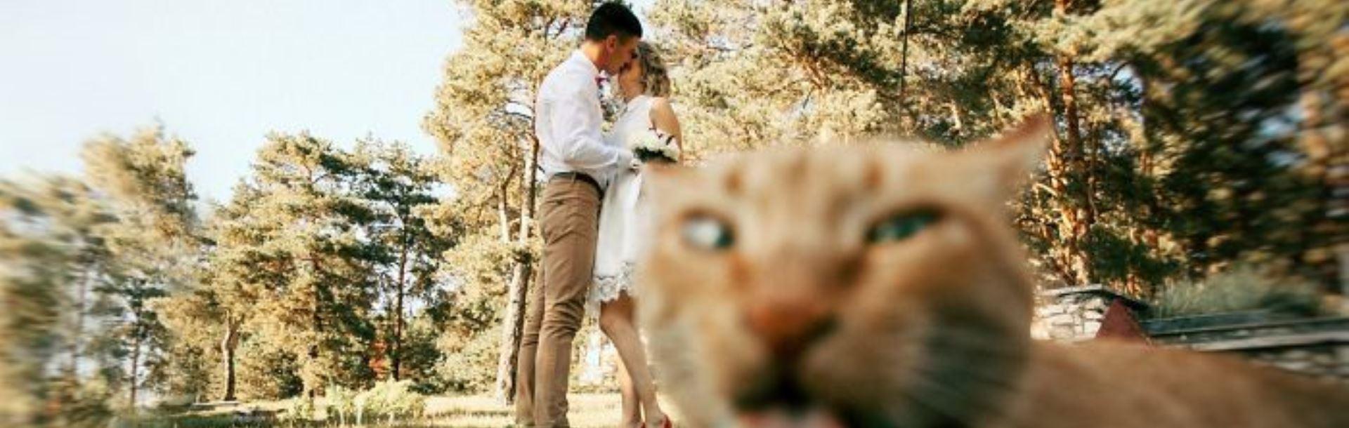 Surprinse asupra faptului! Pisici năzdrăvane, prinse în flagrant! - Galerie foto
