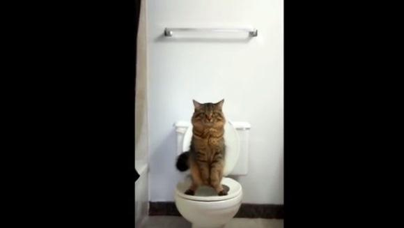 Pisicuţa care foloseşte toaleta stând în două lăbuţe – VIDEO
