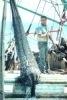 Pescuitul crevetilor devine mai putin agresiv